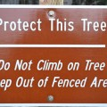 Sign at the Octpus Tree