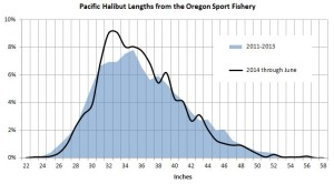 halibut sizes in oregon